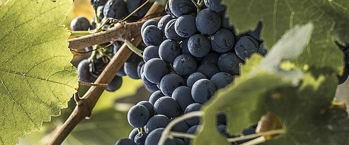 Agrigento Wine Food i saperi ed i sapori delle terre Agrigentine