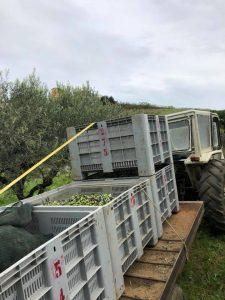 Trasporto delle Olive
