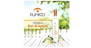 Zahare Liquore ai Fiori di Agrumi Punico 2