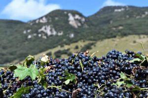 cabernet-franc-vino-e-vitigni-di-sicilia