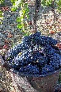 cabernet-sauvignon-vino-e-vitigni-di-sicilia