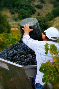 corinto-nero-sicilia-vino-e-vitigni-eolie-salina