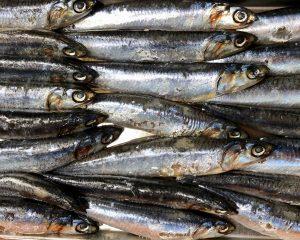 prodotti-ittici-siciliani